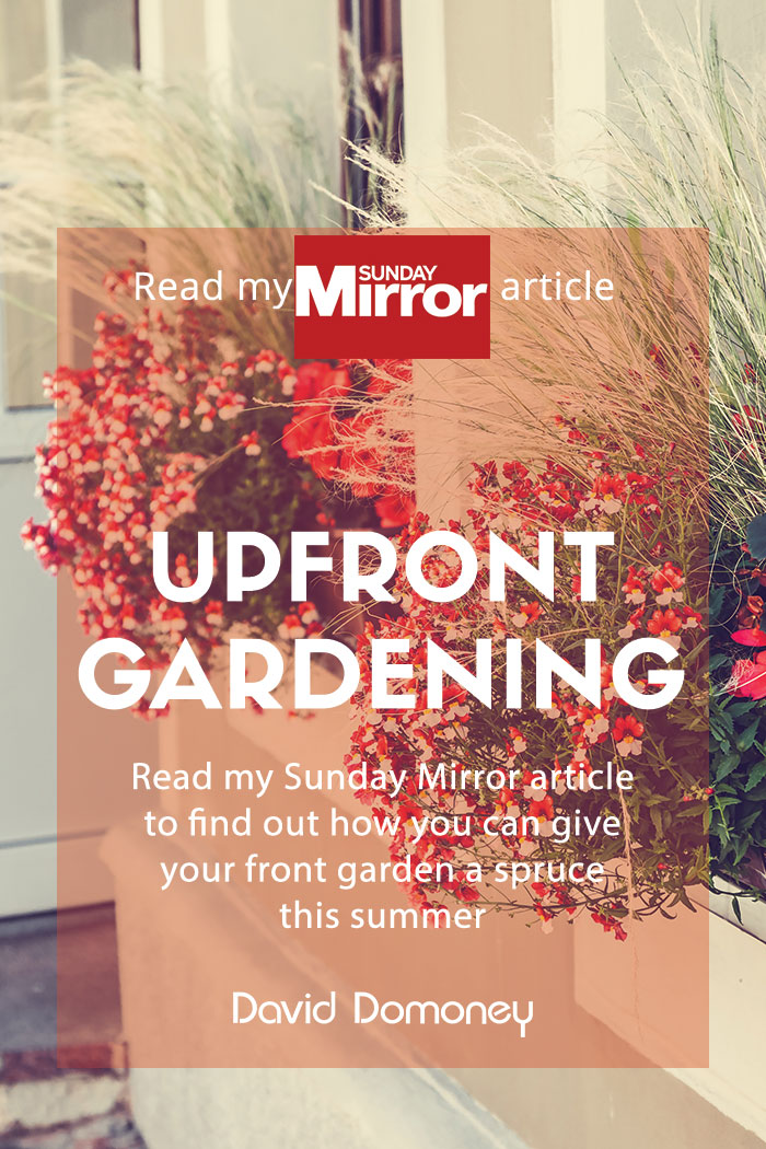 @daviddomoney's cover photo for 'Sunday Mirror article: Upfront gardening'