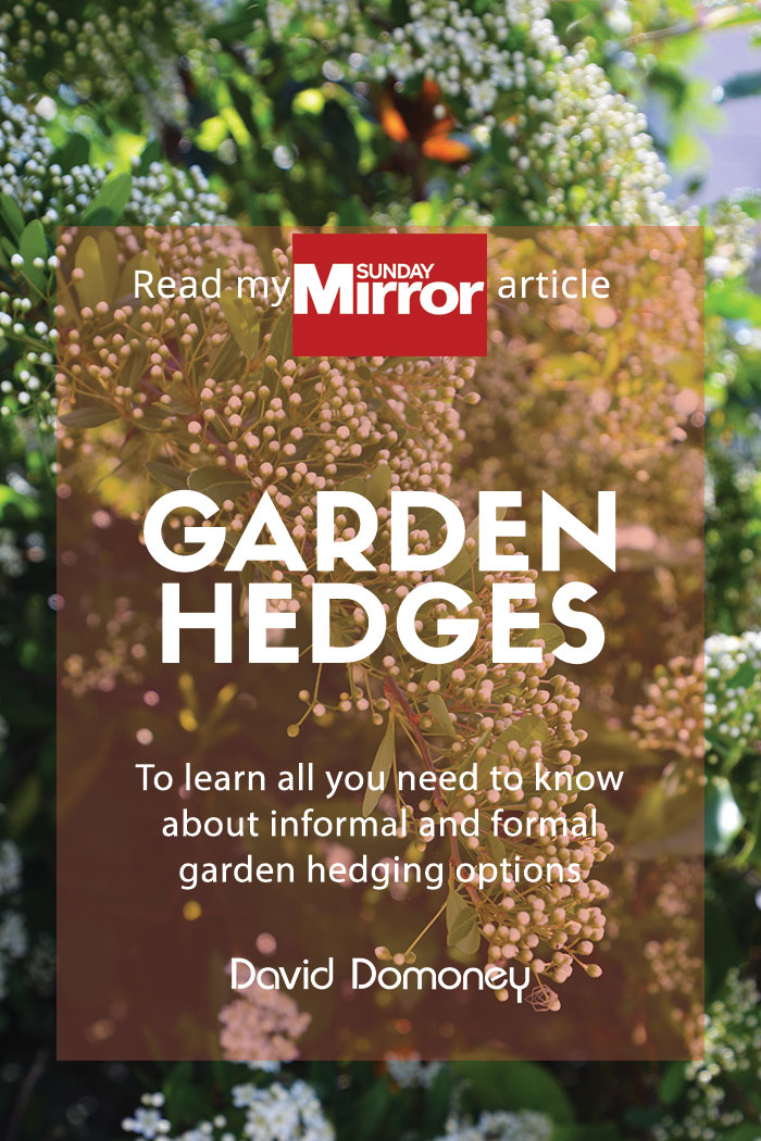 @daviddomoney's cover photo for 'Sunday Mirror article: Hedges'