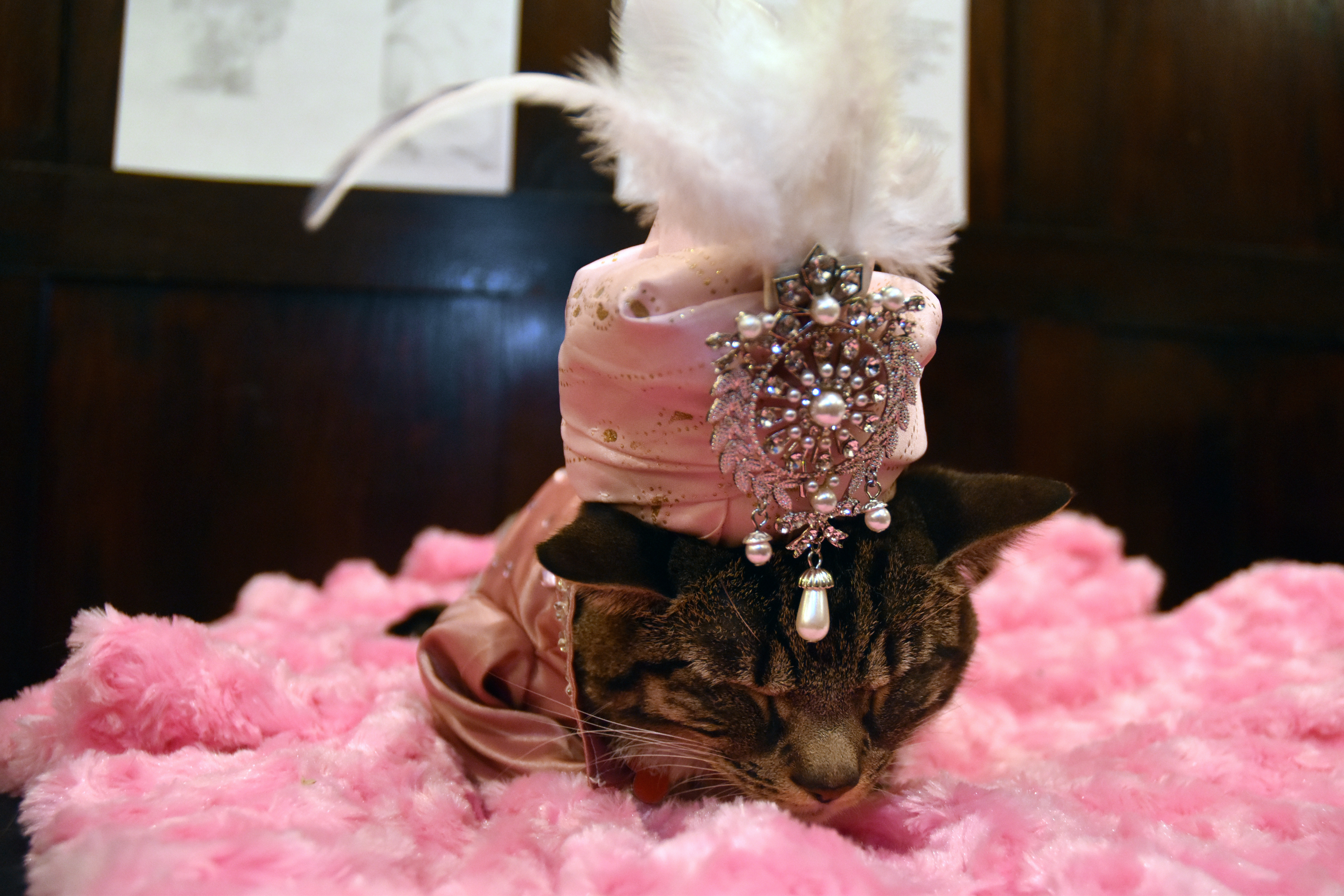 @travelingiq's cover photo for 'Kitty Couture Meets Jellicle Ball at The Algonquin Hotel'