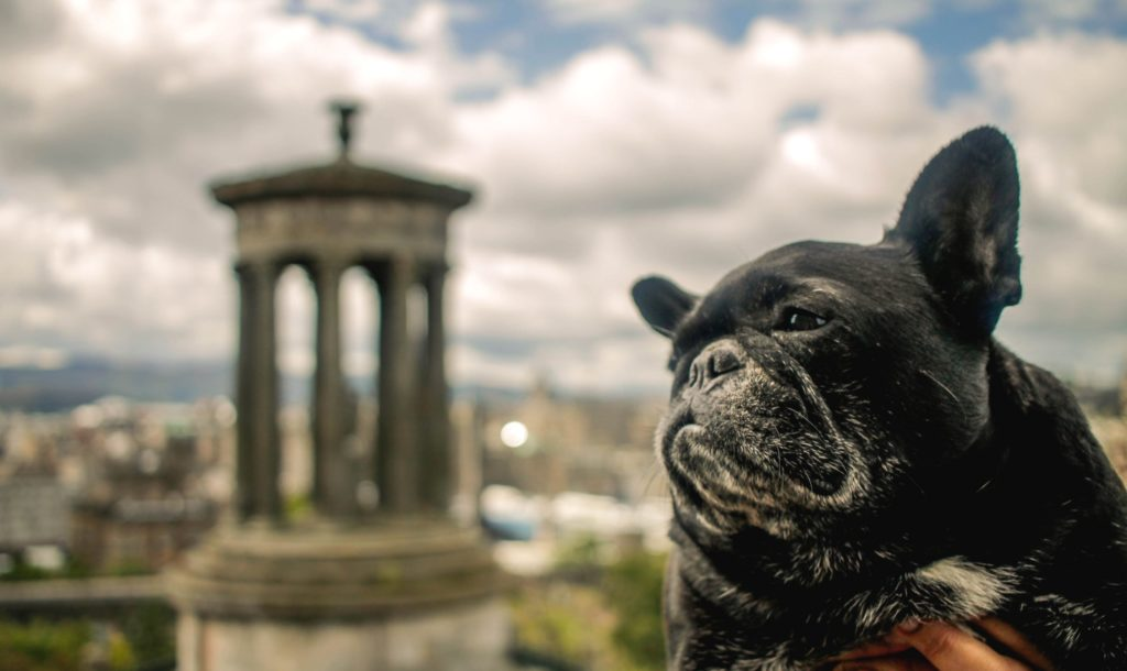 @grrlgenius_'s cover photo for 'Traveling to Scotland from London with a Dog - Where's The Frenchie?'