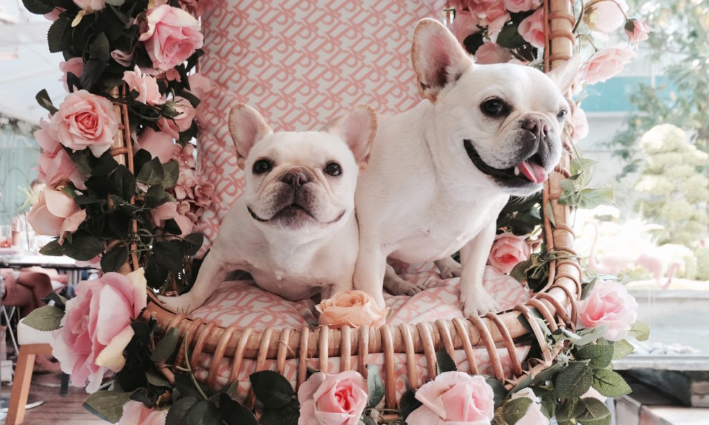 @grrlgenius_'s cover photo for 'The Most Instagrammable Spots: Flower Edition - Where's The Frenchie?'
