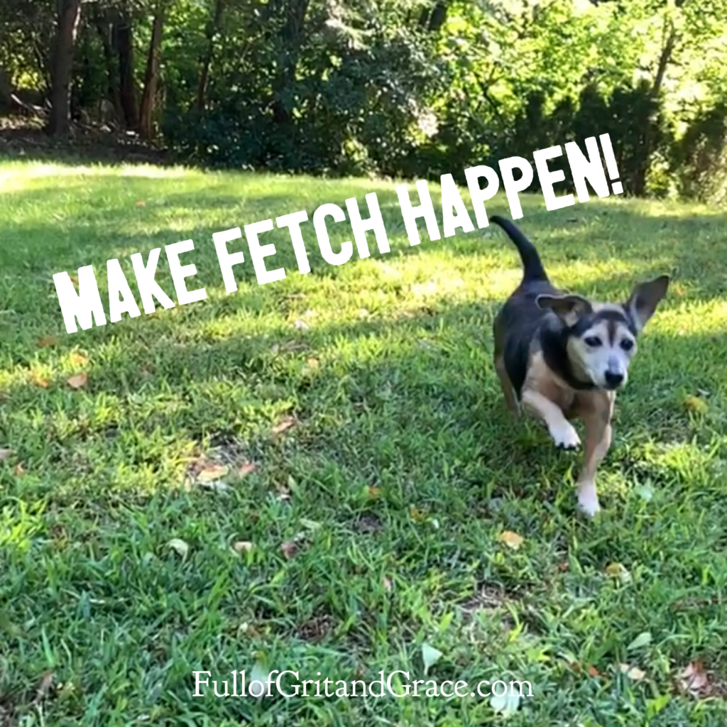 @thejennagreen's cover photo for 'The Best Dog Party of the Year: National Fetch Day! - Full of Grit and Grace'