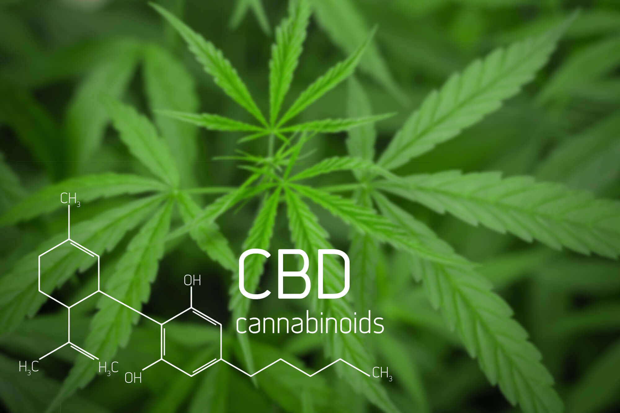 @cannabispromoter's cover photo for '5 Awesome Things About CBD'
