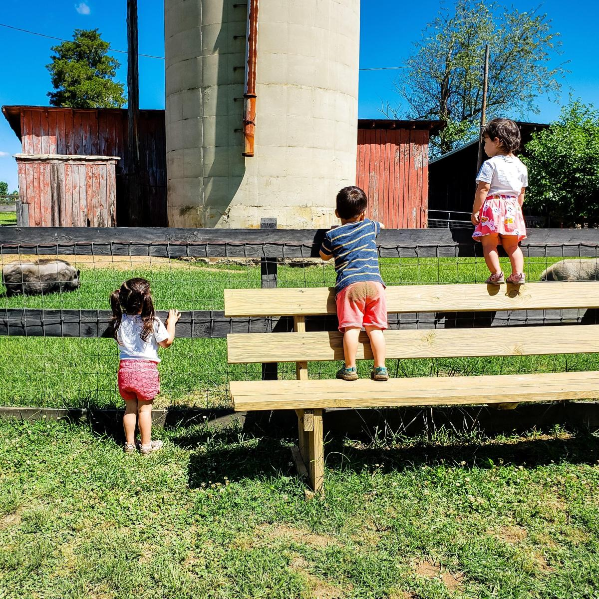 @toddlinacrossamerica's cover photo for '11 Pictures That Will Make You Want to Take Your Kids to Fredericksburg, Virginia'