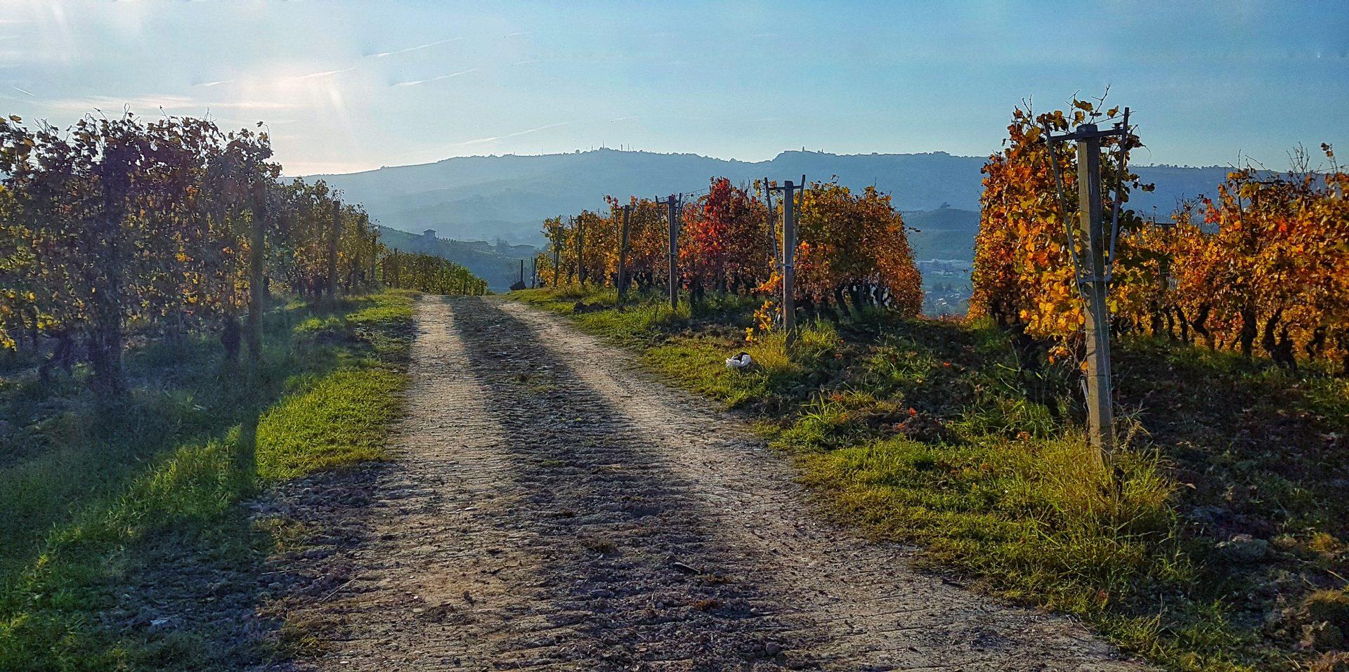 @ministryfab's cover photo for 'Nelle Langhe in mountain bike: due giorni tra vigneti e borghi antichi'