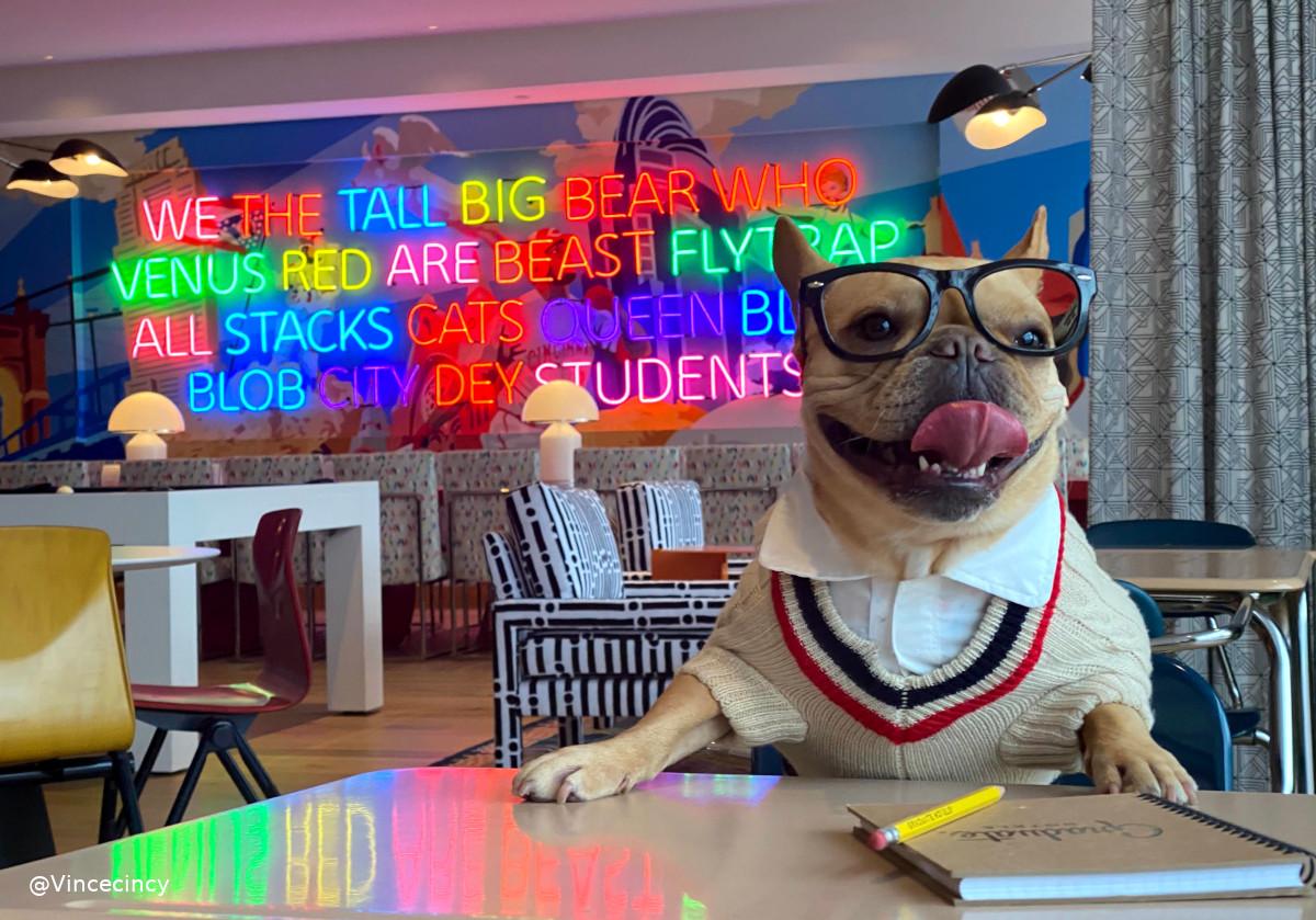 @vincecincy's cover photo for 'Visit Graduate Cincinnati – a Pet-Friendly Hotel'