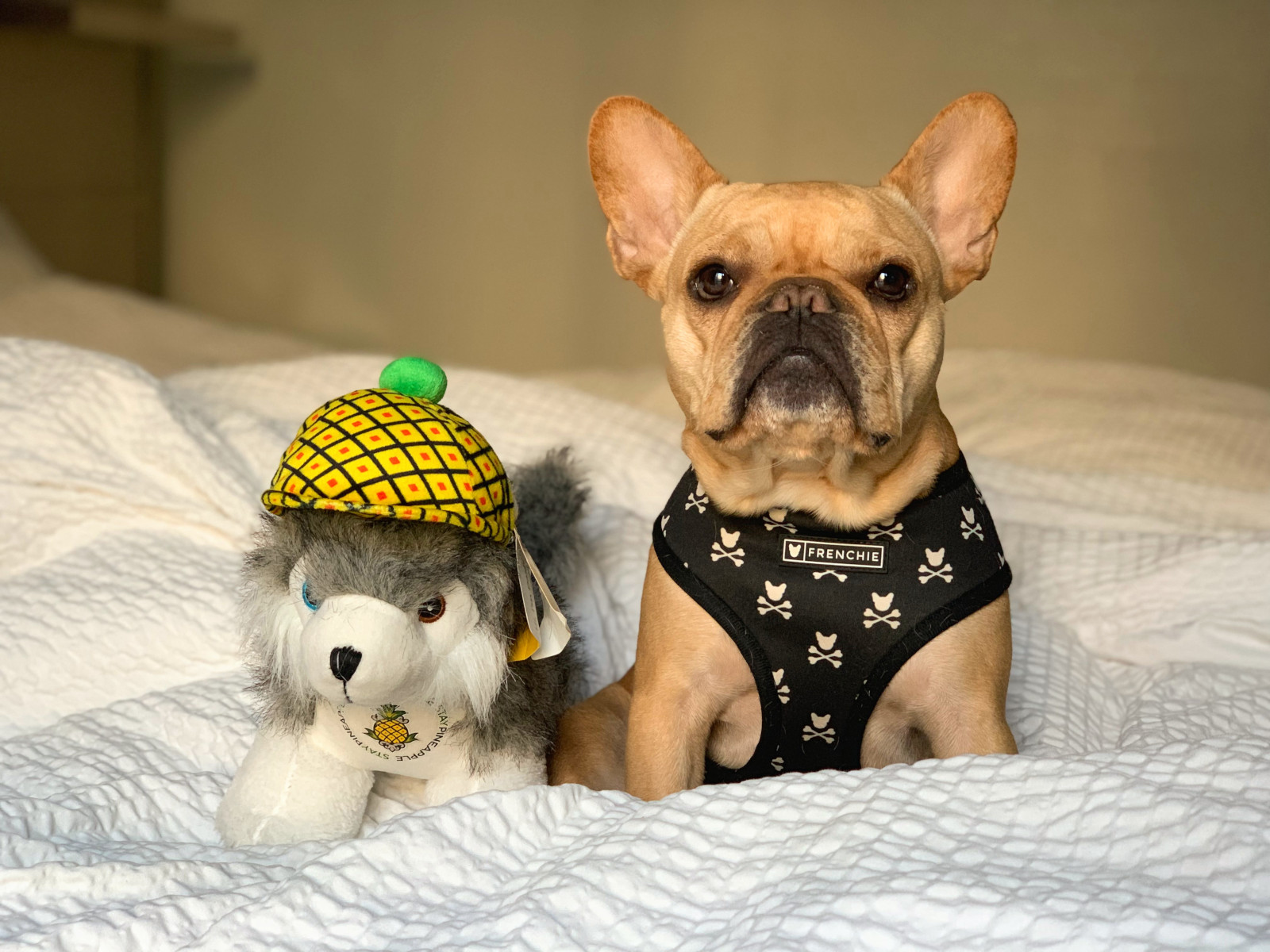 @vincecincy's cover photo for 'Have Dog; Will Travel   Staypineapple Hotel'