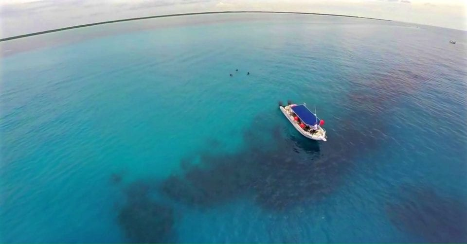 @coleman_concierge's cover photo for 'Cozumel Dive Guide & Interactive Map - Everything You Need to Know Above and Below the Water'